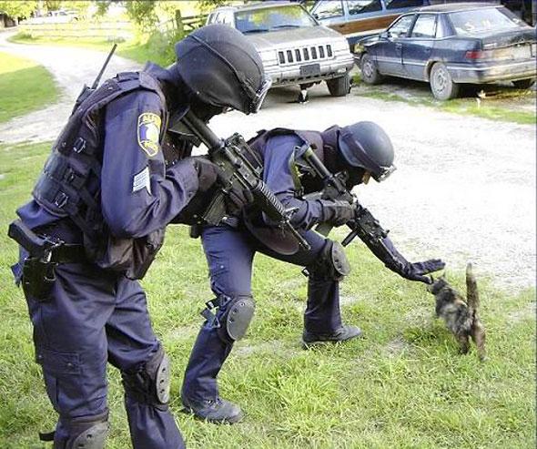 cat swat