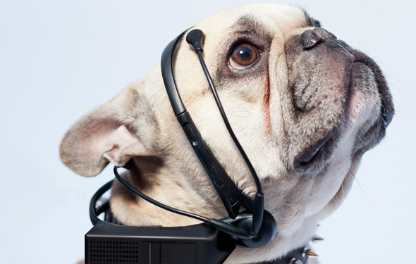 Translate What Your Dog is Thinking with No More Woof